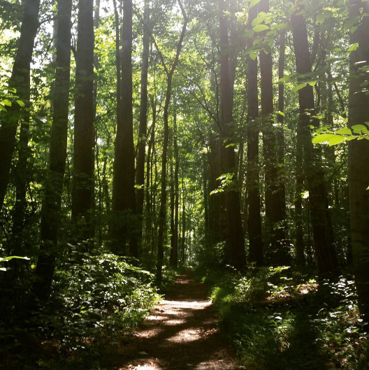 [Image description: A beautiful picture of the forest is shot from a lower angle and shows a trail parting the trees. The sun is peeking through the tree tops.]